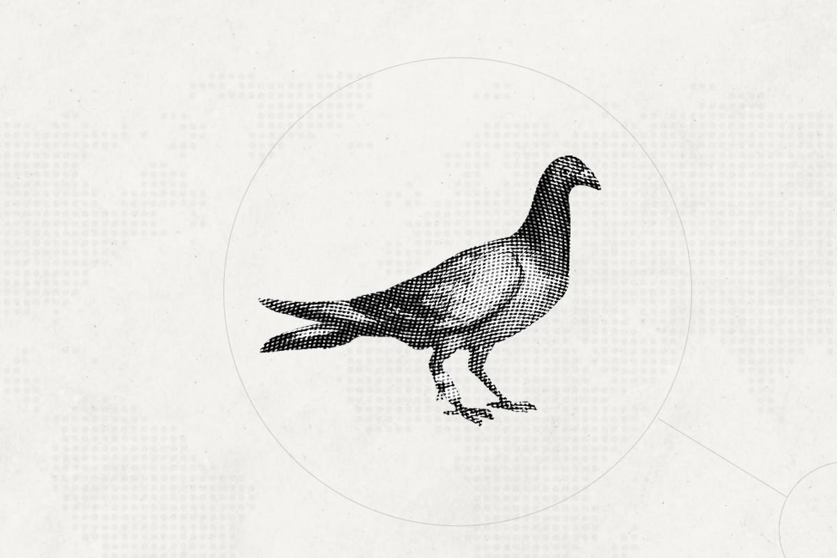 THiNKNET Design Studio วิวัฒนาการการสื่อสาร Carrier Pigeon พิราบสื่อสาร